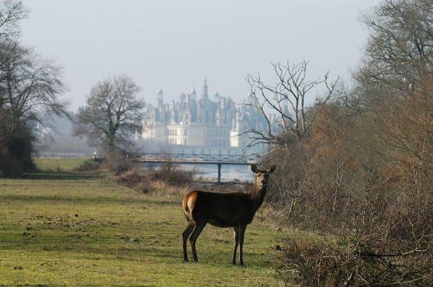 Le parc forestier a été conçu à l'origine pour être une réserve de chasse royale.  Photo Domaine national de Chambord ©F. Forget